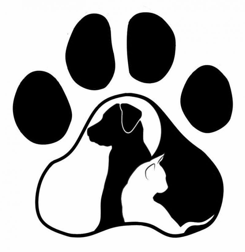 Dog sitter/Cat sitter/Dog sitter socia Enpa con esperienza pluriennale