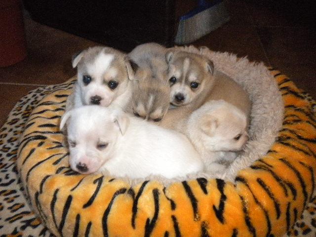 Regalo per adozione cuccioli di piccola taglia petpassion for Nomi per cagnolini di piccola taglia