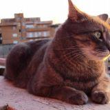 Camillo al tramonto