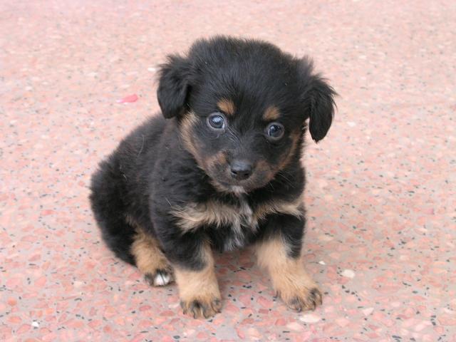 Cerco cucciolo in regalo di pastore tedesco petpassion for Cerco televisore in regalo