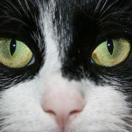 theblackcat