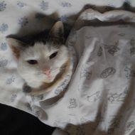 Sotto coperta!