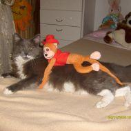 kikko con la sua adorata scimmietta