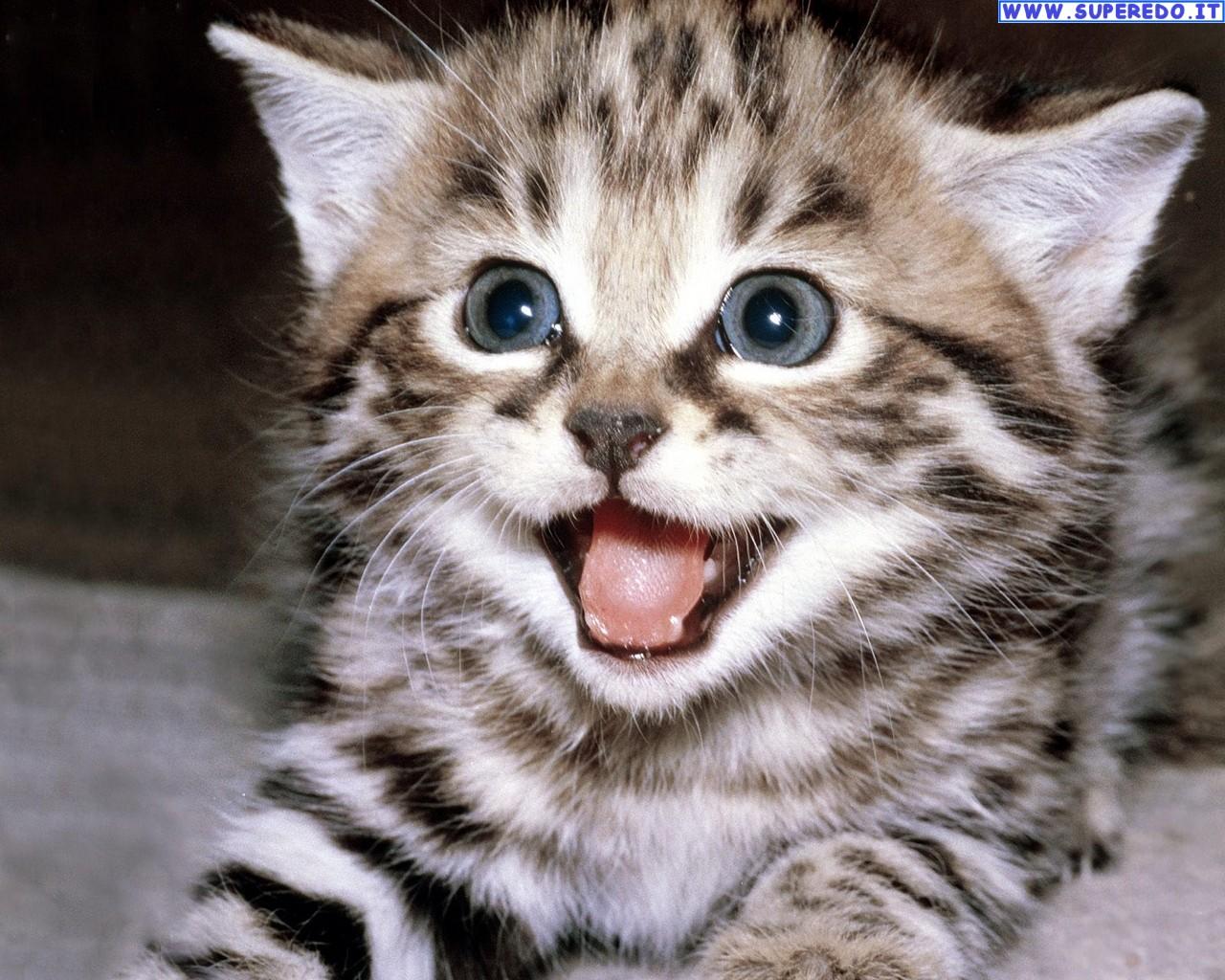 Amato cerco un cucciolo di gatto ! | Petpassion MX18