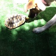 Giochi con l'amica