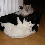 Felix, Sprint e Pepsy