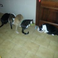 Pepsy, Kitty, Shiro, Benny e Felix