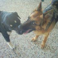 Shayra e Jack