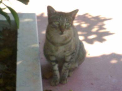 Tiger,randagio di Brindisi,maschio.