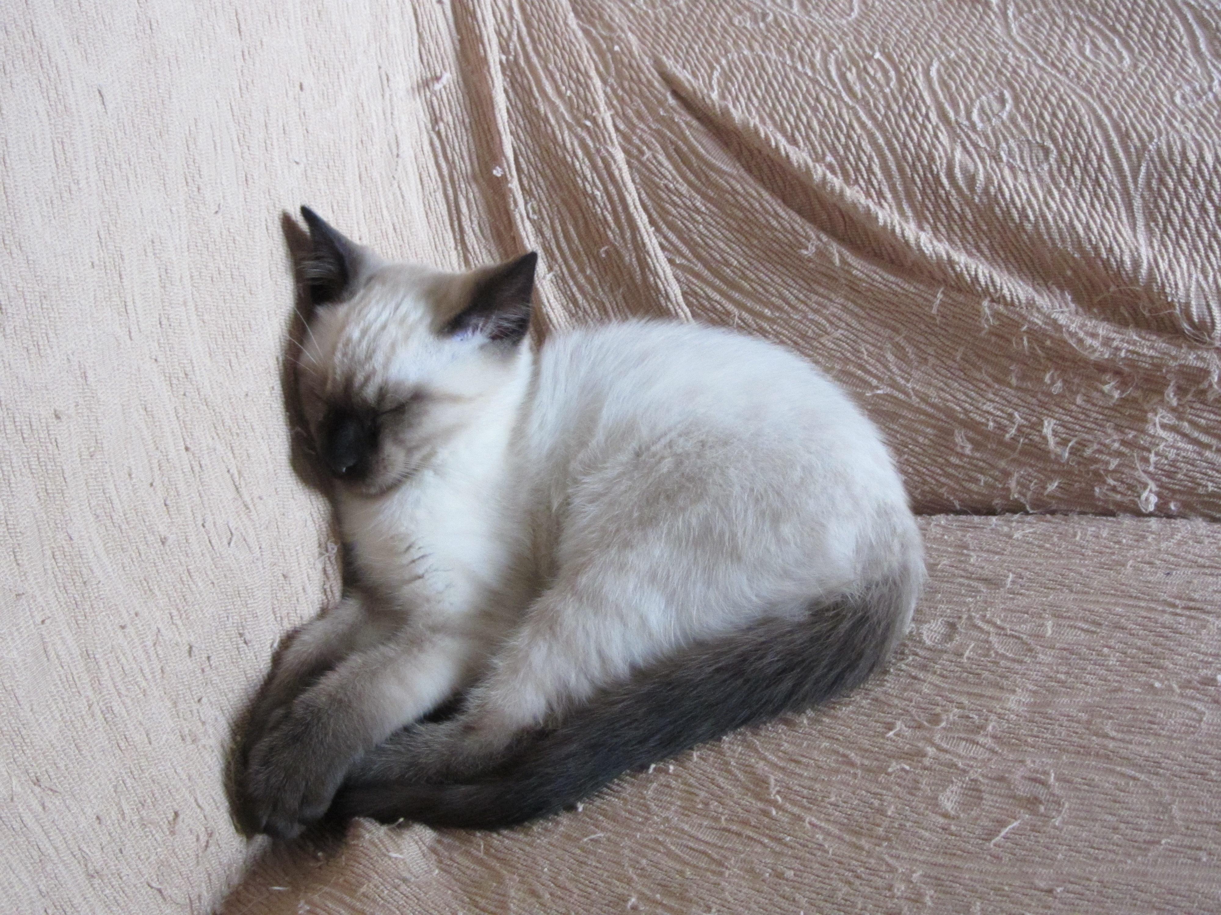 Arthurino dorme sul divano petpassion - Chiavata sul divano ...