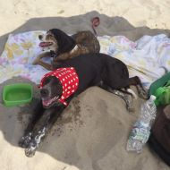 Billy e Lilly beach!!!!!!!