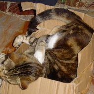 Kuni in scatola