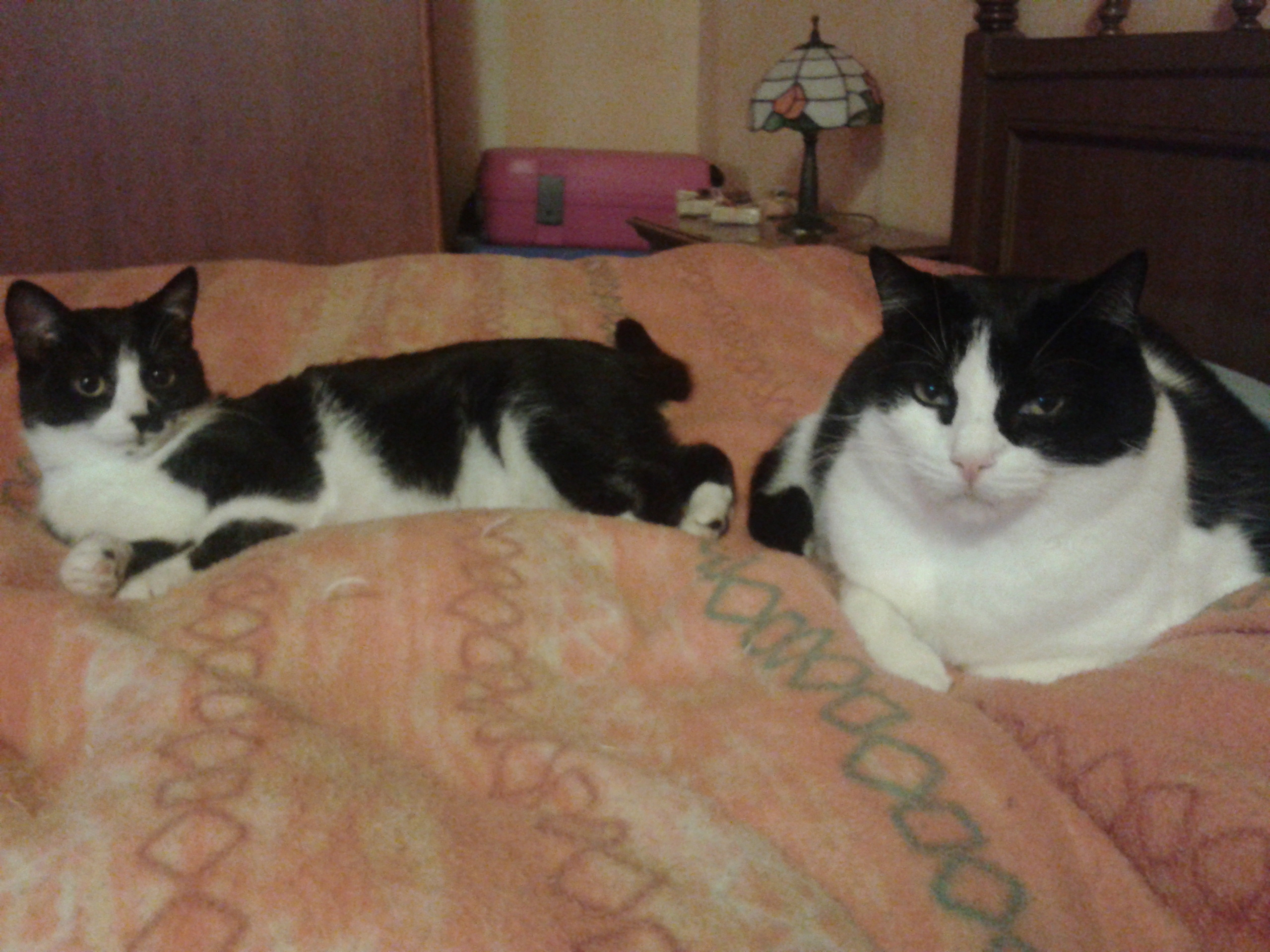 Cerco 2 gattini in regalo petpassion for Cerco mobile in regalo