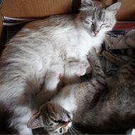 questione di gatte