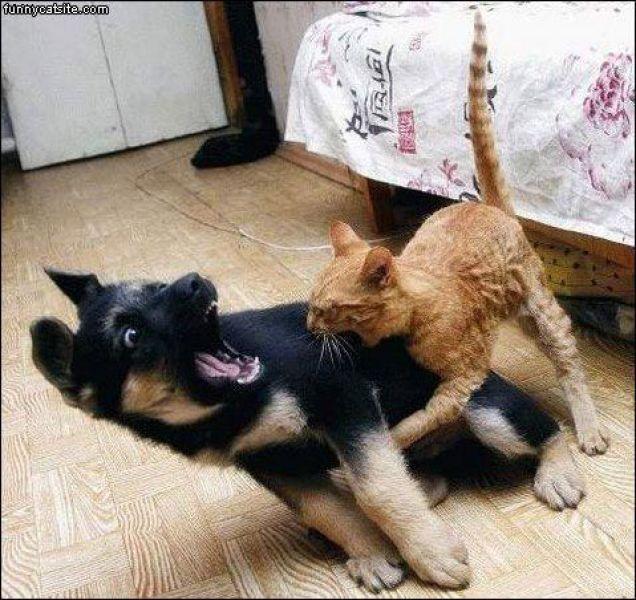 Cane E Gatto Che Litigano Video Divertenti Animali Petpassion