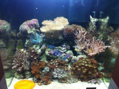 Pesci di barriera corallina