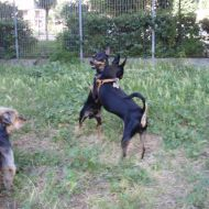 Pepito gioca con Spartaco