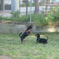 Pepito e Spartaco giocano