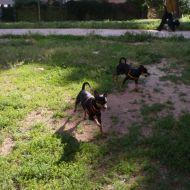 Pepito corre con Maya