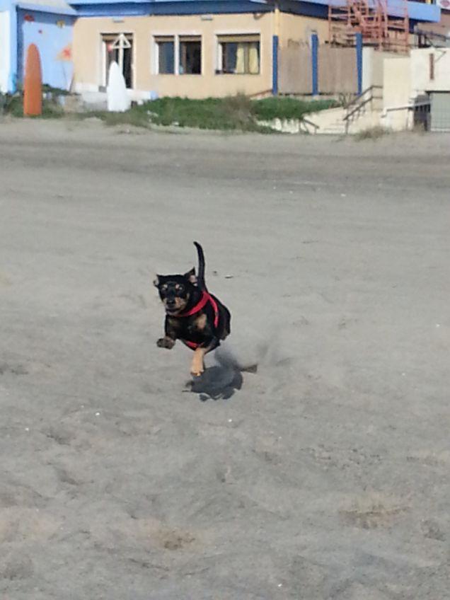 Pepito corre felice sulla spiaggia