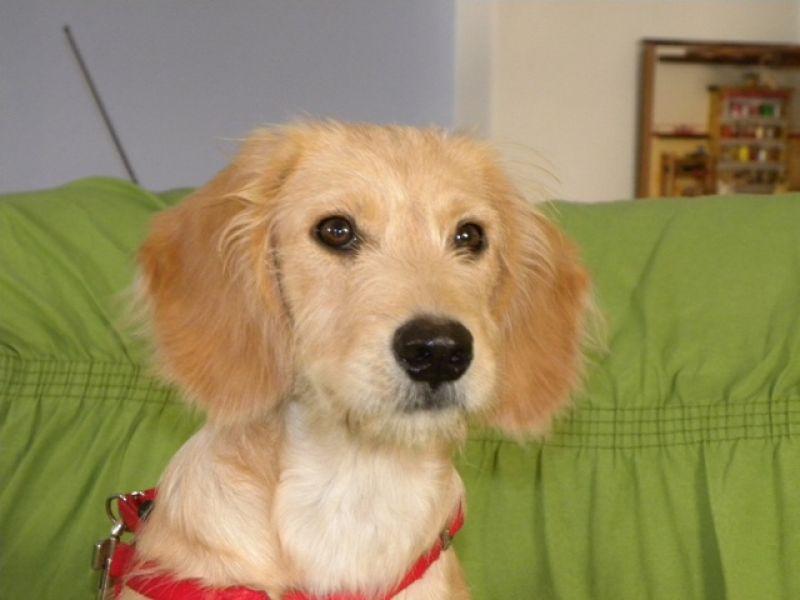 dolcissima cucciola di 4 mesi aspetta un afamiglia