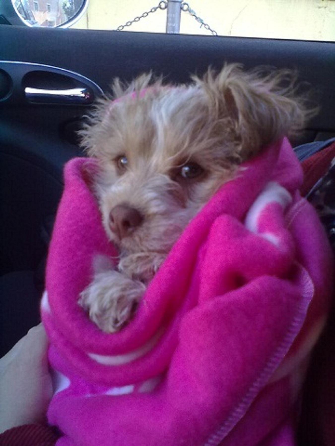 Pensione familiare per cani piccola media taglia h24 for Nomi per cagnolini di piccola taglia