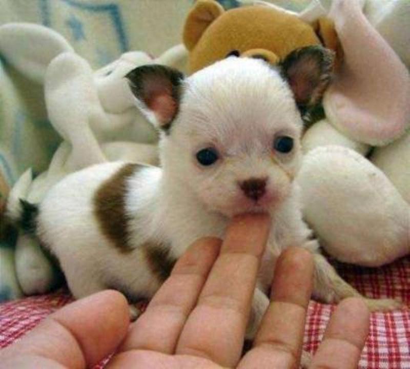 Cerco in regalo un cane cucciolo di piccola taglia  Petpassion