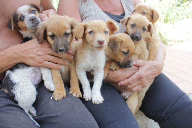 Cuccioli taglia piccola cercano casa petpassion for Nomi per cagnolini di piccola taglia