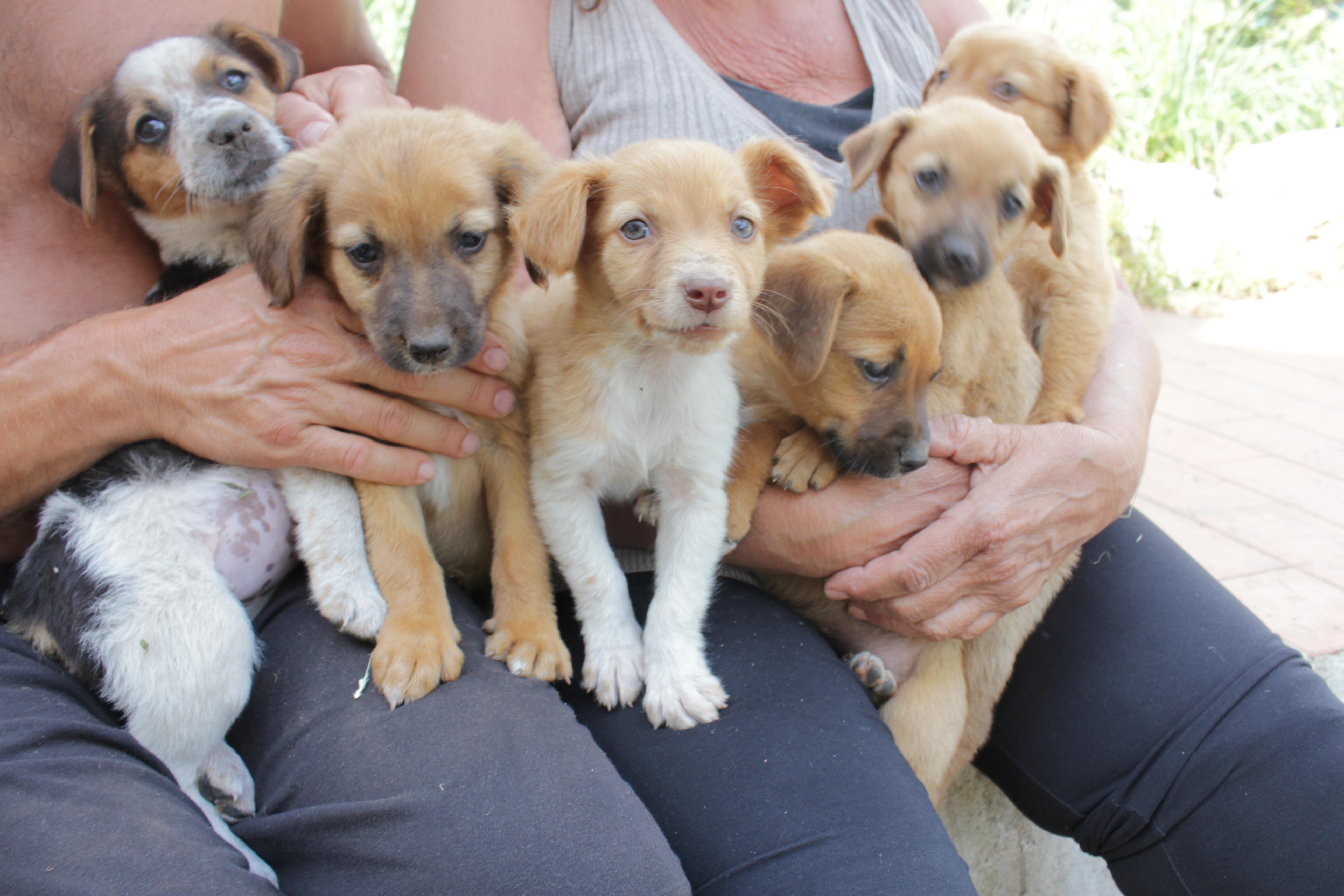 Cuccioli taglia piccola cercano casa