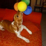 daiki e i palloncini