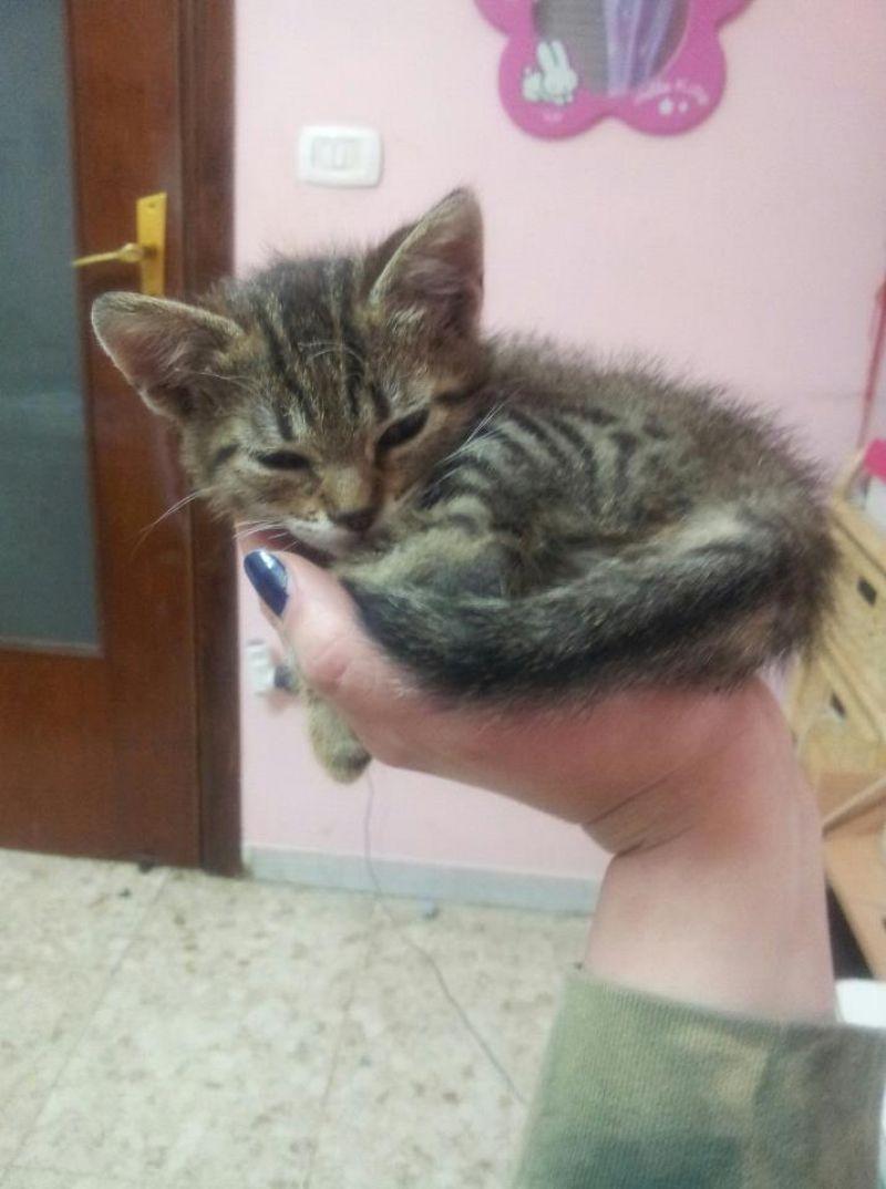 Urgente regalo dolce gattina di circa 30 giorni nn for Cerco divano in regalo milano
