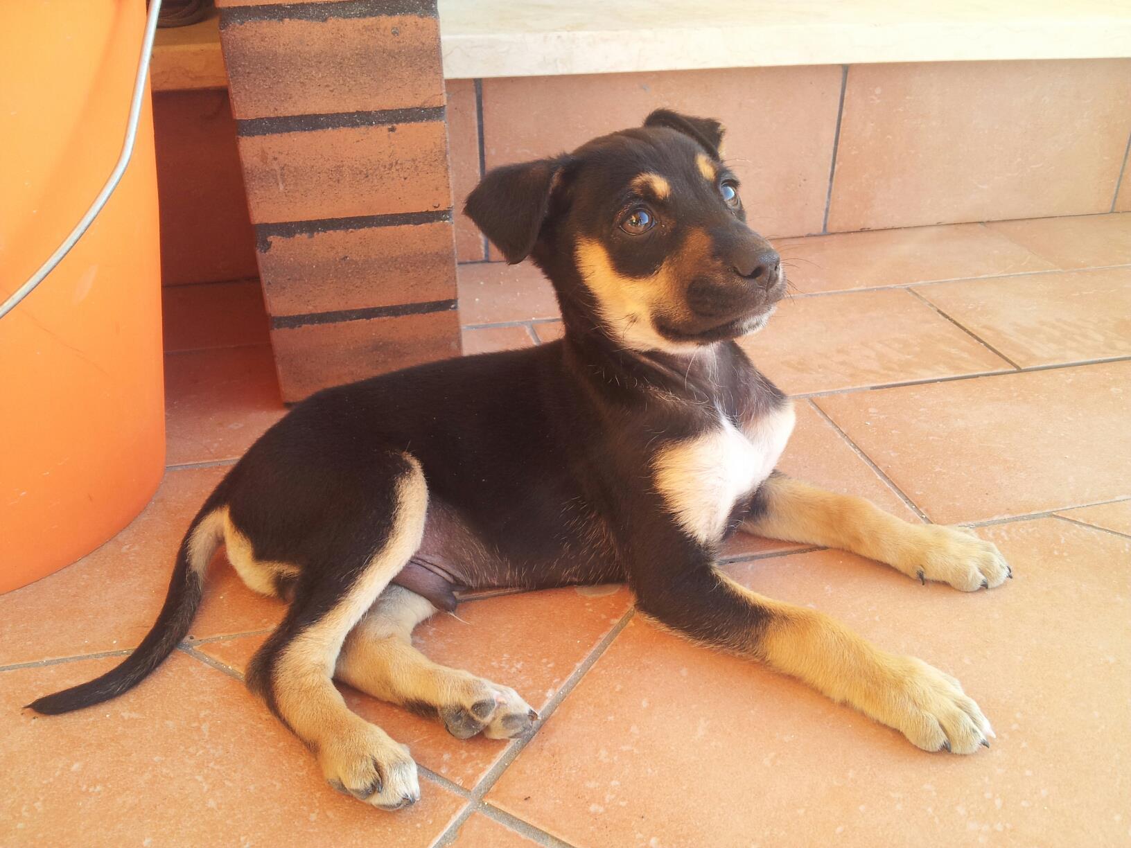 regalo cane di piccola taglia  Petpassion