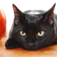 Il gatto Minu e la zucca di Halloween