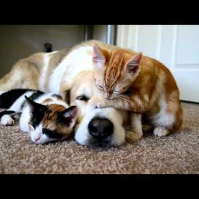 Cane E Gatto Amore Possibile Video Animali Petpassion