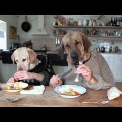 Due cani a tavola video animali petpassion - Cane che mangia a tavola ...