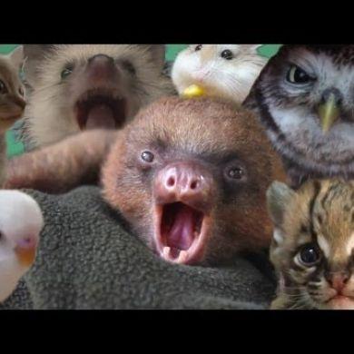 Video Di Animali Meravigliosi E Dolcissimi Petpassion