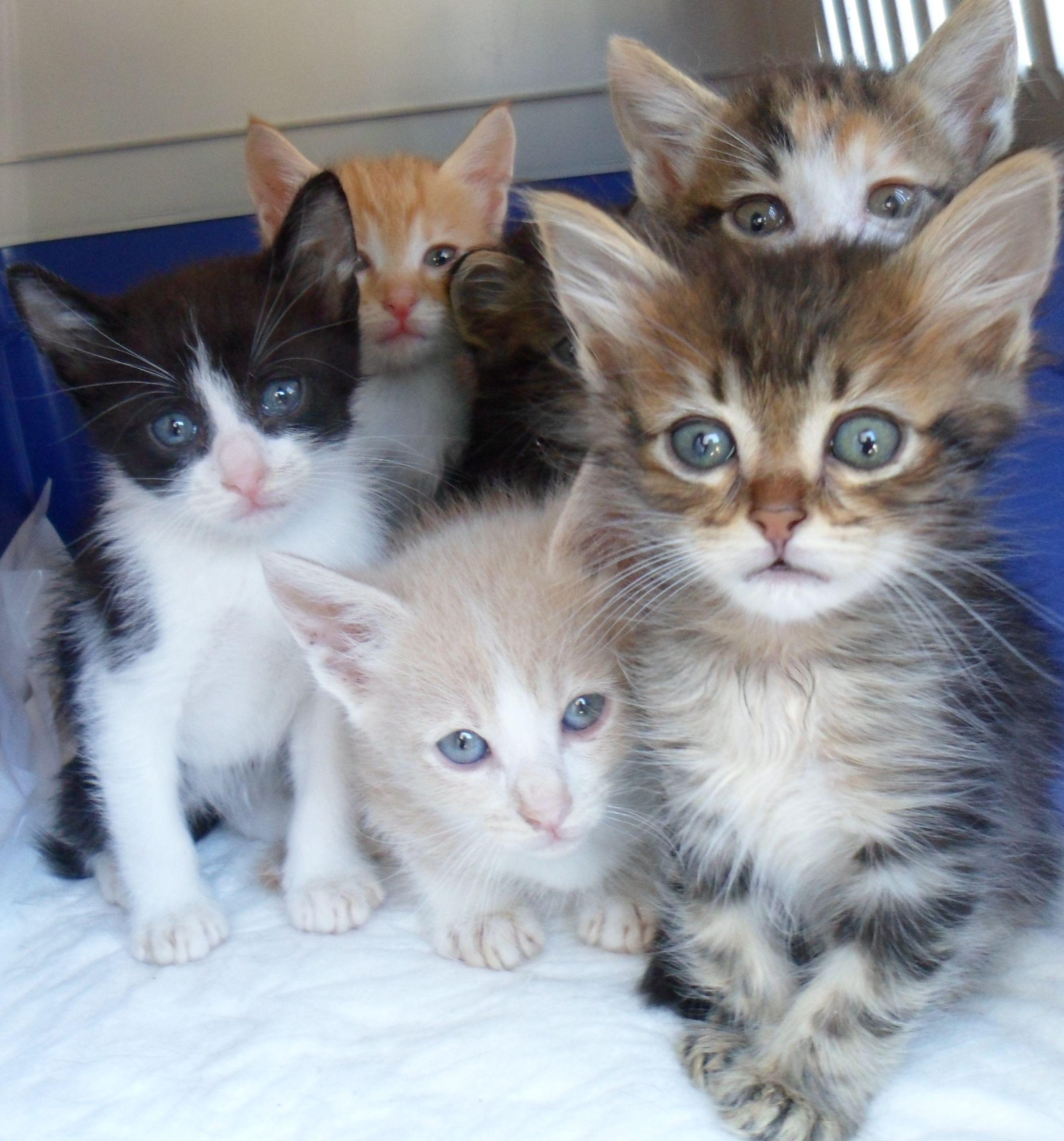 Regalo 13 gattini di 6 settimane e 3 gatte di 10 mesi for Regalo annunci