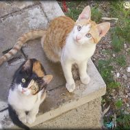 Achille&Calipso in attesa della pappa Gourmet