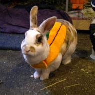 Halloween: coniglietto o scherzetto?