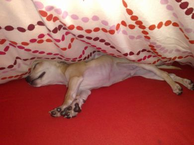 sotto le coperte