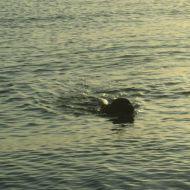 Nuotare all'alba