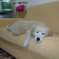 FIONA & NEMO