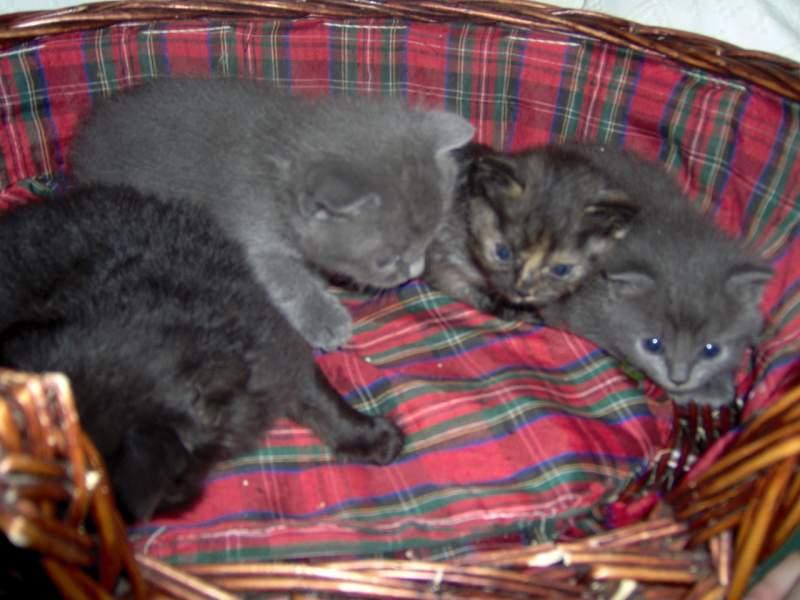 Cerco gattini a pelo abbastanza lungo in regalo petpassion for Cerco arredamento in regalo