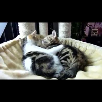 Abbracci Tra Gatti Dolcissimi Video Animali Petpassion