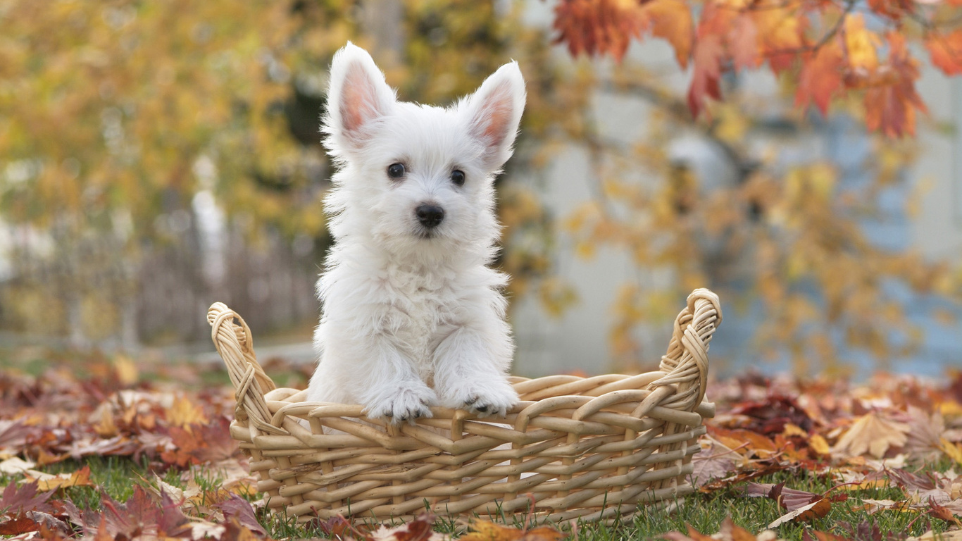 Cerco cucciolo di taglia medio piccola in regalo petpassion for Cerco di tutto in regalo