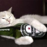 amata birra