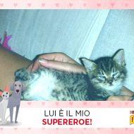 MI little love