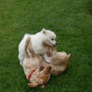Fox e Briciola