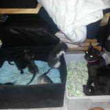 i cucciolotti della mia gattina ..