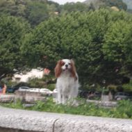 al lago con buddy!